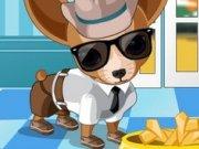 Hainute pentru Chihuahua