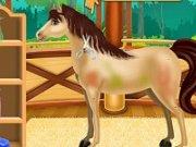 Spa pentru caii de la ferma
