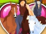 Ingrijeste caii de la ferma