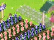 Planteaza in gradina cu flori