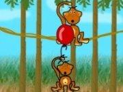 Maimute in echilibru