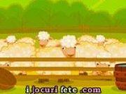 Ingrijeste oile de la ferma